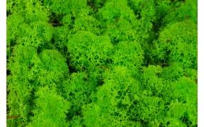 Lichen stabilisés