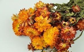 Bouquets de fleurs séchées. Vente aux professionnels.