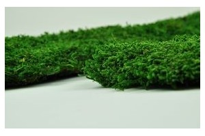 Preserved mosses - Wholesaler - Wholesale / Online Purchase
