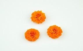 autres fleurs stabilisées